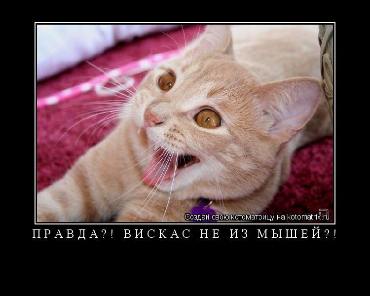 Котоматрица: ПРАВДА?! ВИСКАС НЕ ИЗ МЫШЕЙ?!