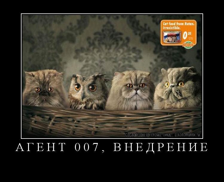 Котоматрица: АГЕНТ 007, ВНЕДРЕНИЕ