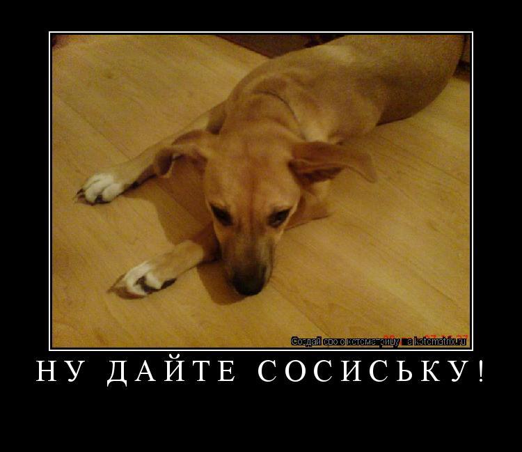 Котоматрица: Ну дайте сосиську!