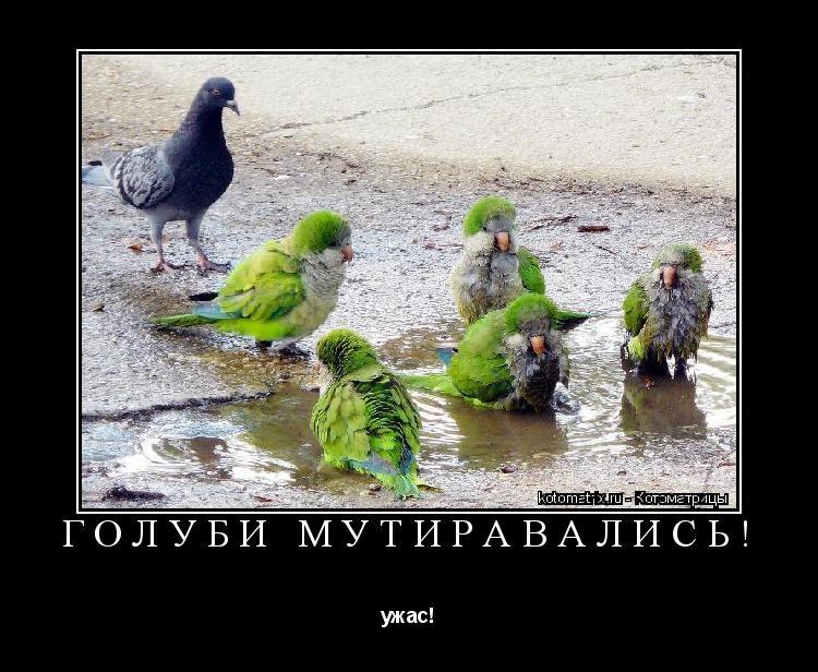 Котоматрица: голуби мутиравались! ужас!