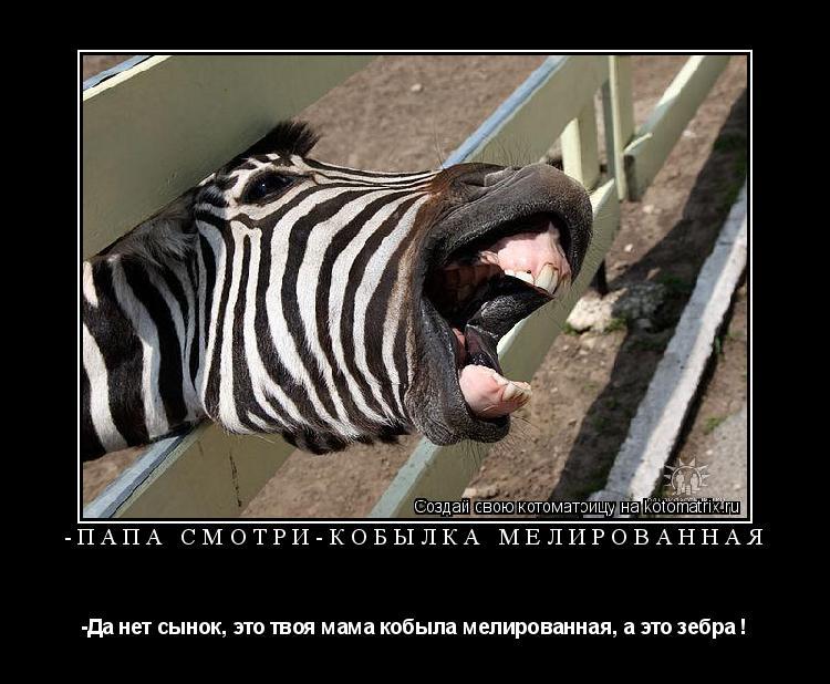Котоматрица: -Папа смотри-кобылка мелированная -Да нет сынок, это твоя мама кобыла мелированная, а это зебра !