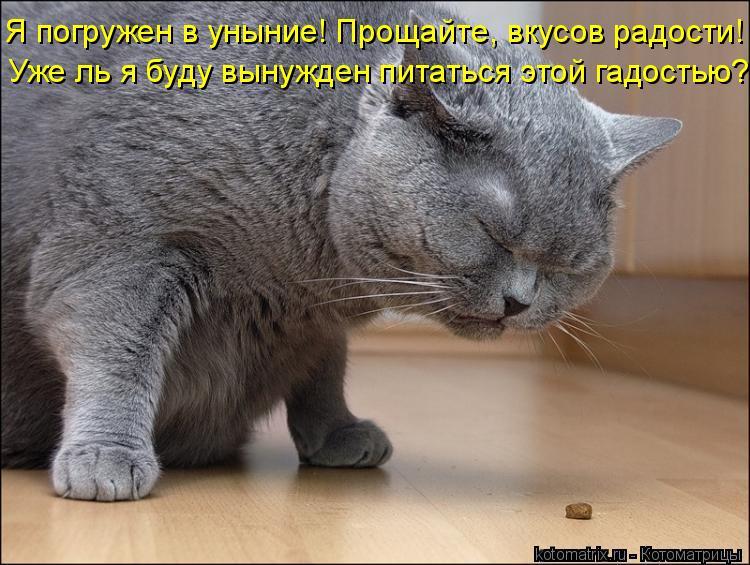 Котоматрица: Уже ль я буду вынужден питаться этой гадостью? Я погружен в уныние! Прощайте, вкусов радости!