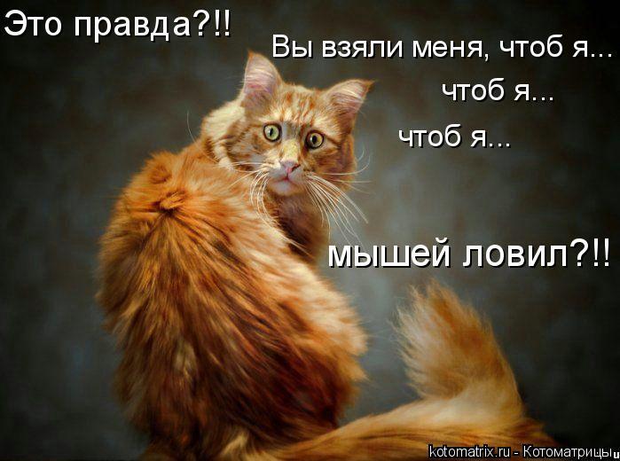 Котоматрица - Это правда?!!  Вы взяли меня, чтоб я... чтоб я... чтоб я... мышей лови