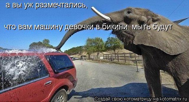 Котоматрица: а вы уж размечтались, что вам машину девочки в бикини  мыть будут