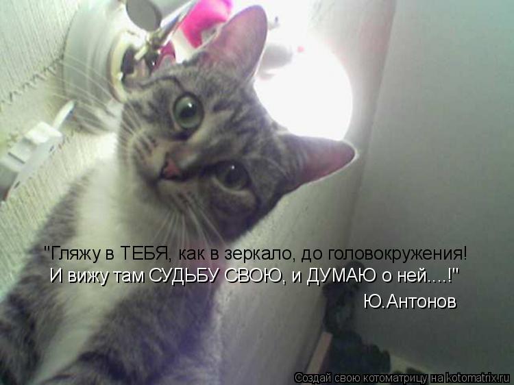 """Котоматрица: """"Гляжу в ТЕБЯ, как в зеркало, до головокружения! И вижу там СУДЬБУ СВОЮ, и ДУМАЮ о ней....!"""" Ю.Антонов"""