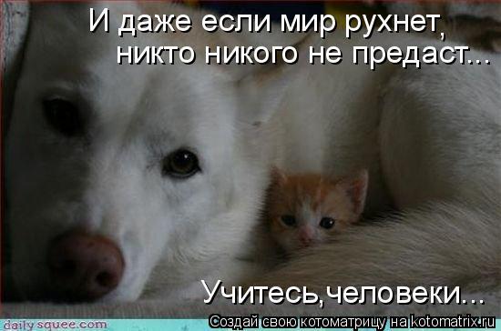 Котоматрица: И даже если мир рухнет , никто никого не предаст... Учитесь,человеки...