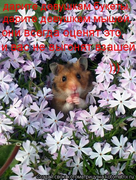 Котоматрица: дарите девушкам букеты, дарите девушкам мышей, они всегда оценят это, и вас не выгонят взашей  )))