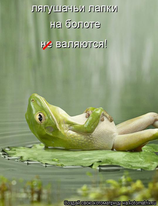 Котоматрица: лягушачьи лапки на болоте не валяются! _
