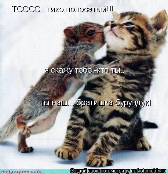 Котоматрица: ТСССС...тихо,полосатый!!! я скажу тебе -кто ты.. ты наш....братишка-бурундук!