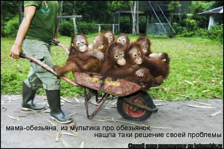 Котоматрица: мама-обезьяна, из мультика про обезьянок,  нашла таки решение своей проблемы