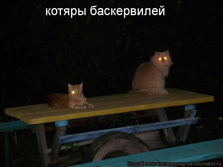Котоматрица: котяры баскервилей