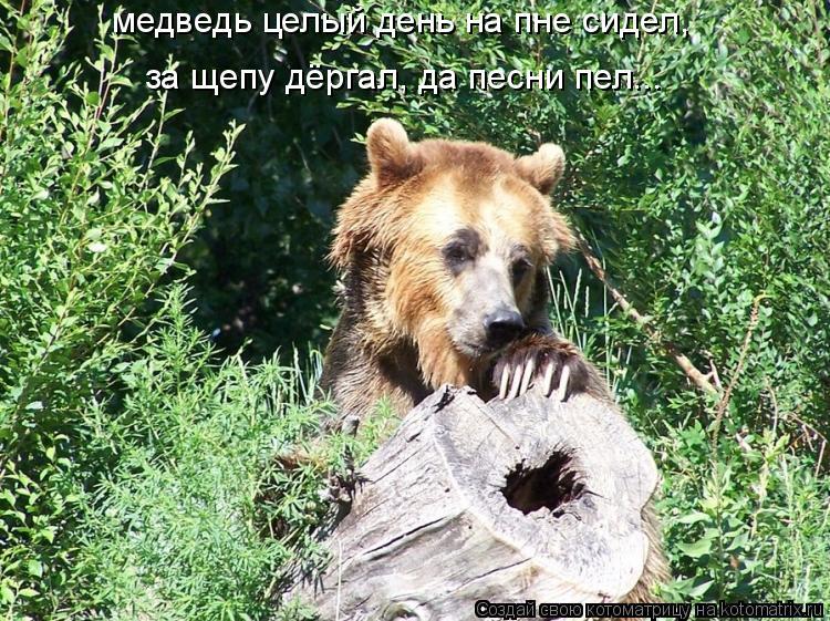 Котоматрица: медведь целый день на пне сидел,  за щепу дёргал, да песни пел...