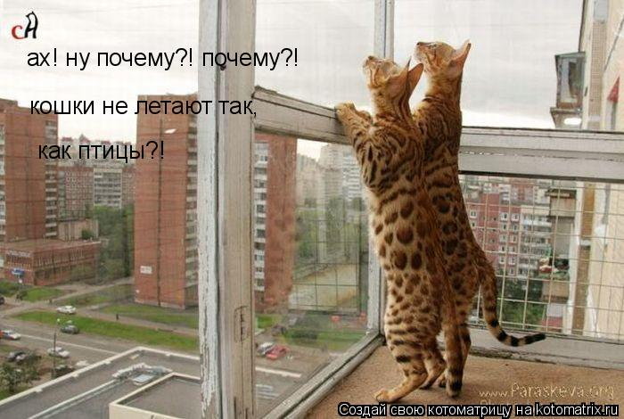 Котоматрица: ах! ну почему?! почему?! кошки не летают так,  как птицы?!