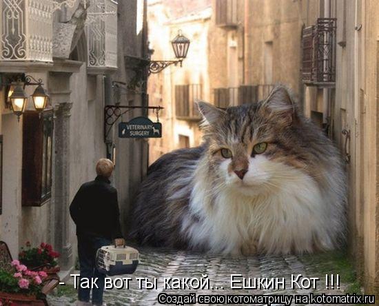 Котоматрица: - Так вот ты какой... Ешкин Кот !!!