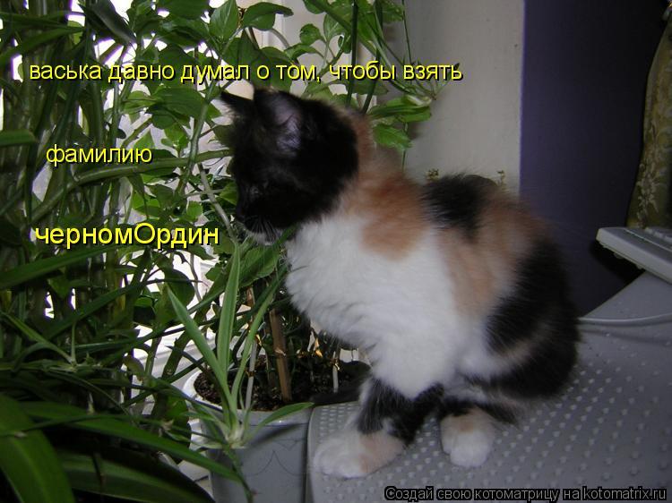 Котоматрица: васька давно думал о том, чтобы взять  фамилию черномОрдин