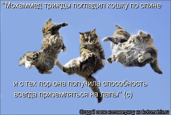 """Котоматрица: """"Мохаммед трижды погладил кошку по спине  и с тех пор она получила способность  всегда приземляться на лапы"""" (с)"""