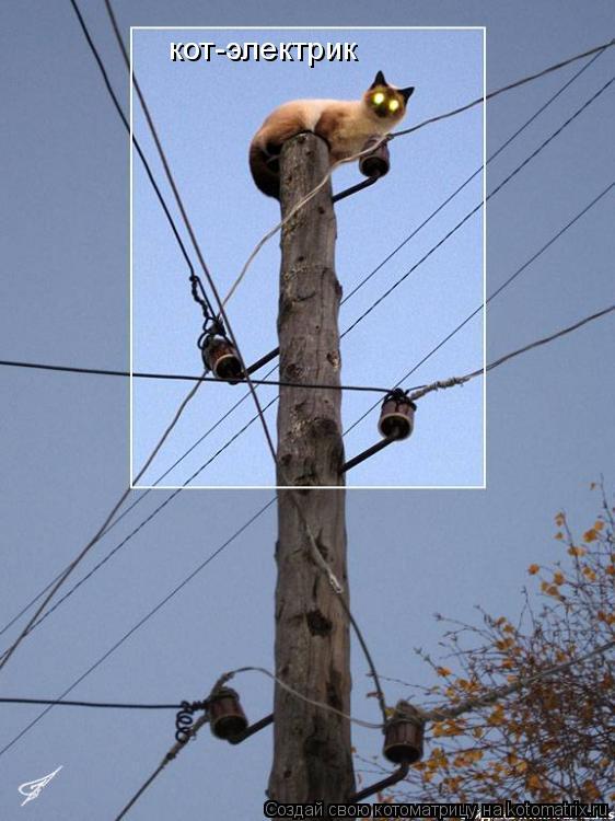 Котоматрица: кот-электрик