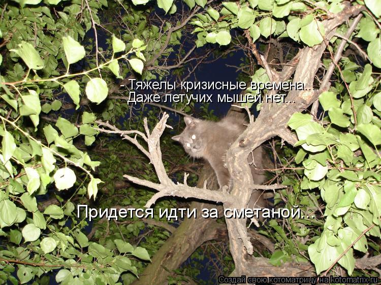Котоматрица: - Тяжелы кризисные времена... Даже летучих мышей нет... Придется идти за сметаной...