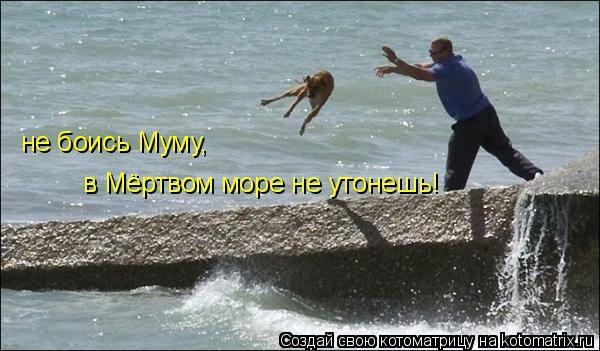 Котоматрица: не боись Муму, в Мёртвом море не утонешь!