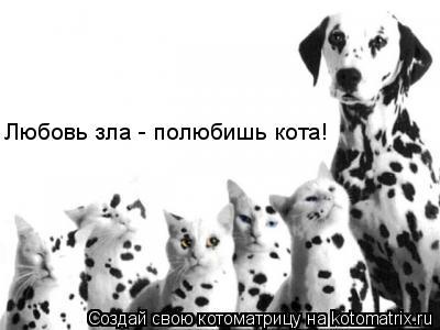 Котоматрица: Любовь зла - полюбишь кота!