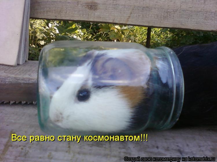 Котоматрица: Все равно стану космонавтом!!!
