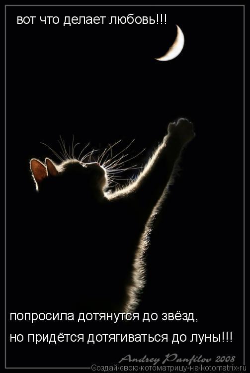 Котоматрица: вот что делает любовь!!! попросила дотянутся до звёзд, попросила дотянутся до звёзд, но придётся дотягиваться до луны!!!