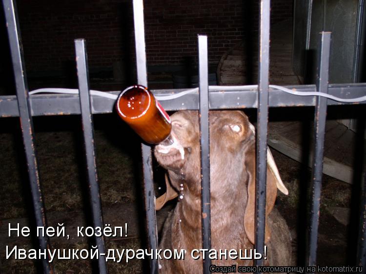 Котоматрица: Не пей, козёл! Иванушкой-дурачком станешь!