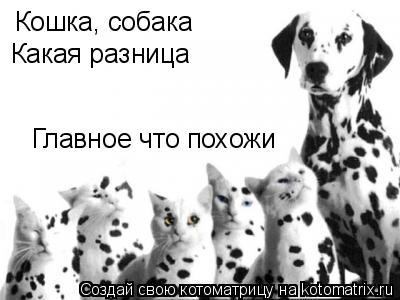 Котоматрица: Кошка, собака Какая разница Главное что похожи