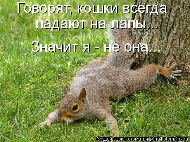 Котоматрица: Говорят, кошки всегда  падают на лапы... Значит я - не она...