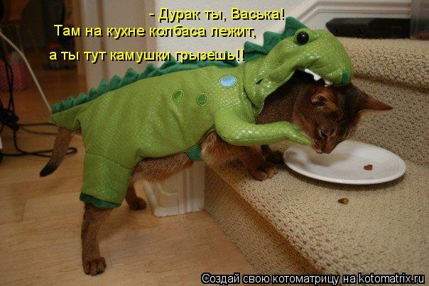 Котоматрица: - Дурак ты, Васька!  Там на кухне колбаса лежит, а ты тут камушки грызешь!!