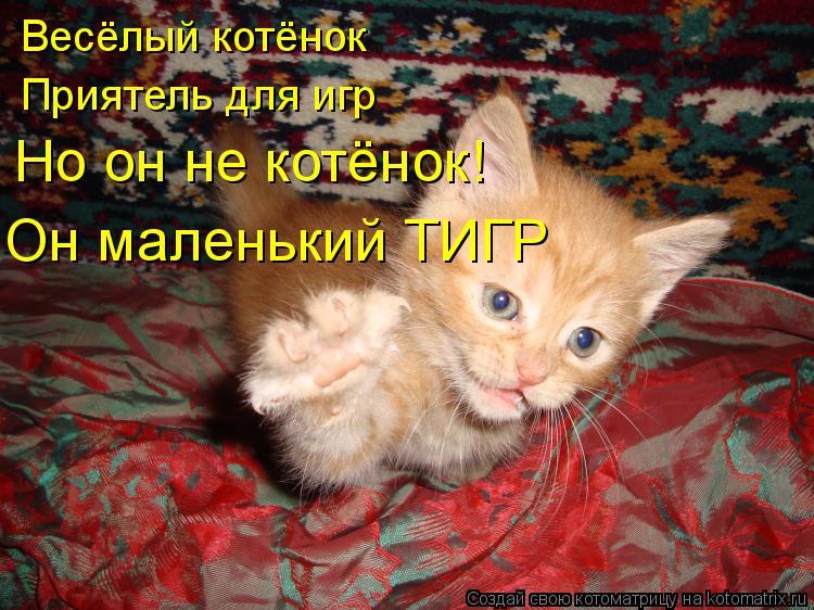 Котоматрица: Весёлый котёнок Приятель для игр Но он не котёнок! Он маленький ТИГР