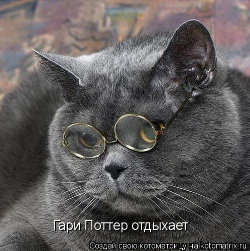 Котоматрица: Гари Поттер отдыхает