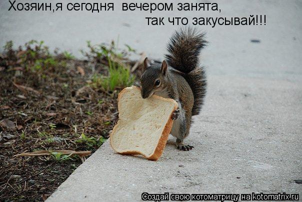 Котоматрица: так что закусывай!!! Хозяин,я сегодня  вечером занята,