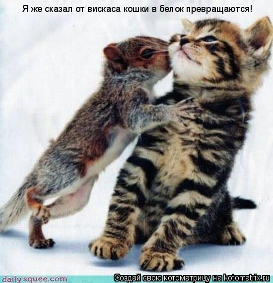 Котоматрица: Я же сказал от вискаса кошки в белок превращаются!