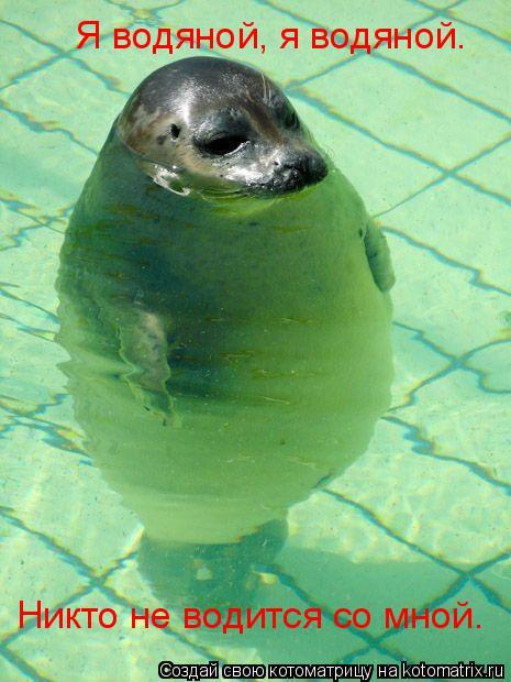 Котоматрица: Я водяной, я водяной.  Никто не водится со мной.