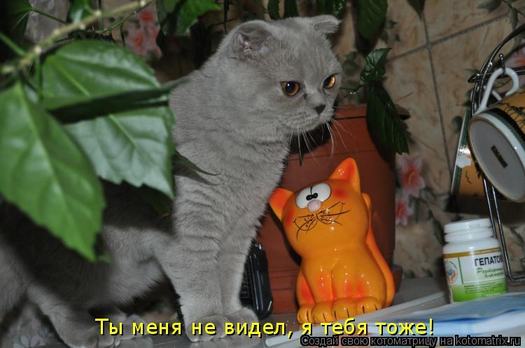 Котоматрица: Ты меня не видел, я тебя тоже!