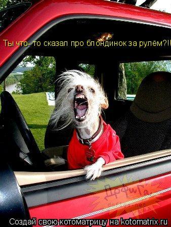 Котоматрица: Ты что- то сказал про блондинок за рулём?!!!!