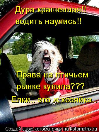 Котоматрица: Дура крашенная!! водить научись!! Права на птичьем  рынке купила??? Елки.. это ж хозяйка..