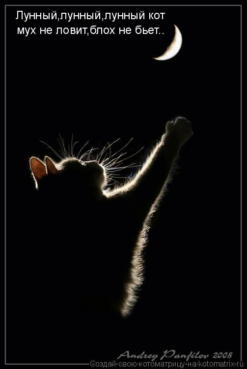 Котоматрица: Лунный,лунный,лунный кот мух не ловит,блох не бьет..