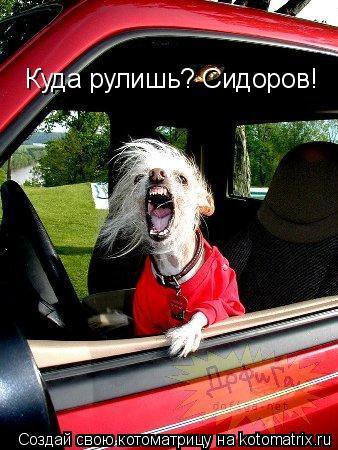 Котоматрица: Куда рулишь? Сидоров!