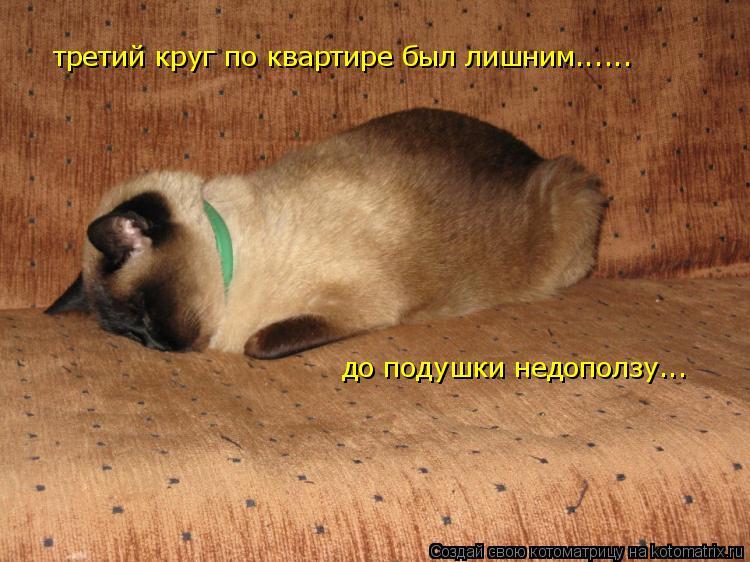 Котоматрица: третий круг по квартире был лишним......  до подушки недоползу...
