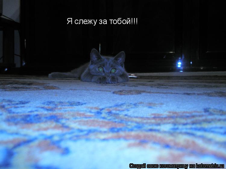 Котоматрица: Я слежу за тобой!!!