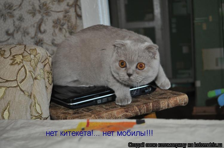 Котоматрица: нет китекета!... нет мобилы!!!