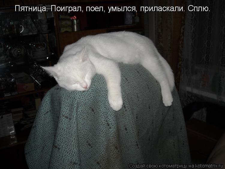 Котоматрица: Пятница. Поиграл, поел, умылся, приласкали. Сплю.