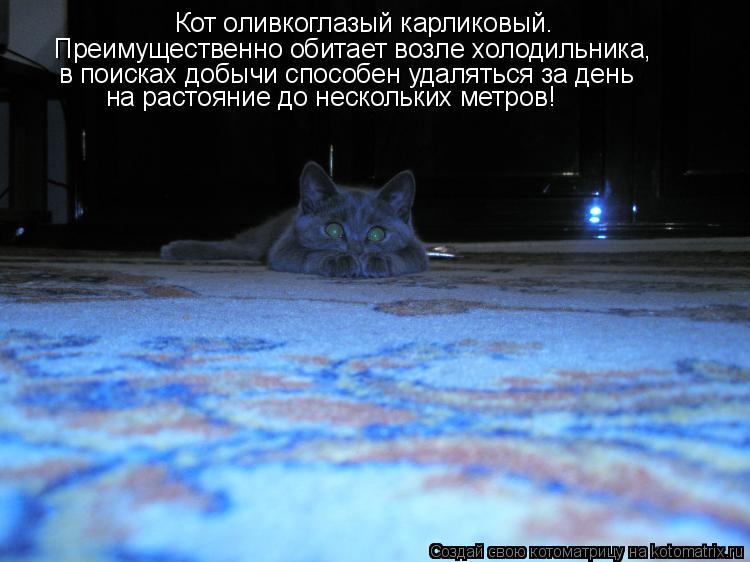 Котоматрица: Кот оливкоглазый карликовый. Преимущественно обитает возле холодильника,  в поисках добычи способен удаляться за день  на растояние до нес