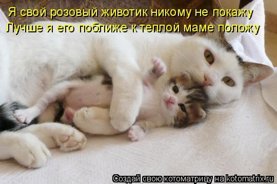 Котоматрица: Я свой розовый животик никому не покажу Лучше я его поближе к теплой маме положу