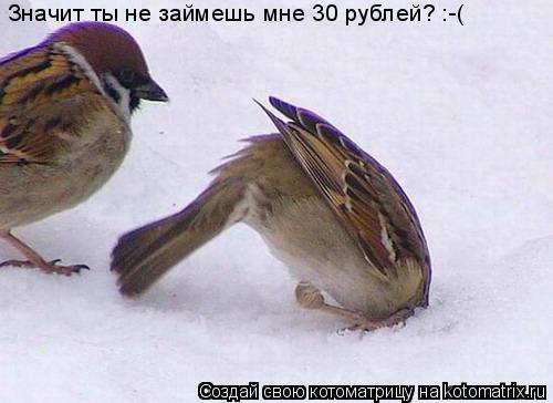 Котоматрица: Значит ты не займешь мне 30 рублей? :-(