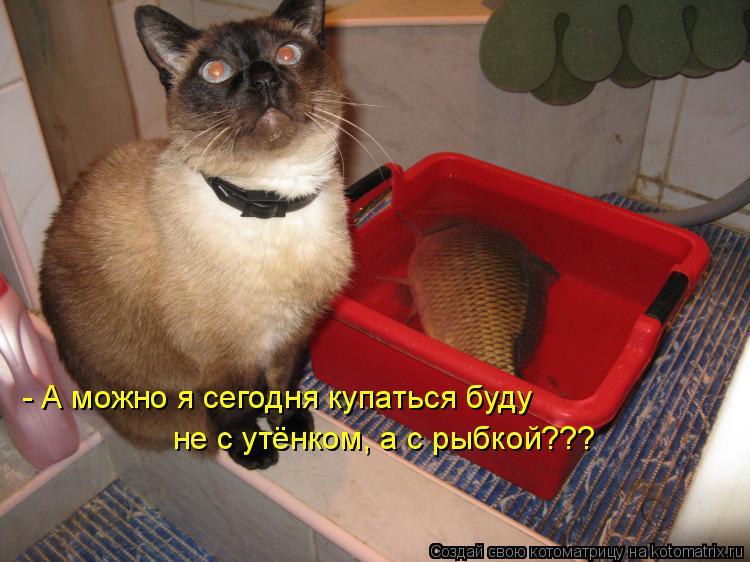 Котоматрица: - А можно я сегодня купаться буду не с утёнком, а с рыбкой???