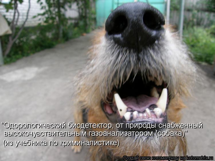 """Котоматрица: """"Одорологический биодетектор, от природы снабженный высокочувствительным газоанализатором (собака)"""" (из учебника по криминалистике)"""