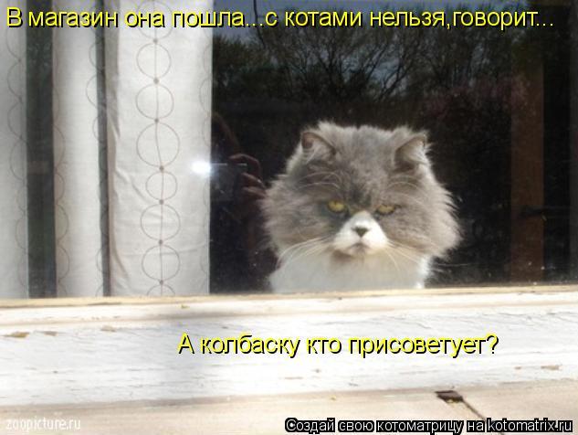 Котоматрица: В магазин она пошла...с котами нельзя,говорит... А колбаску кто присоветует?